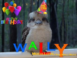 our mascot Wallffles the Irascible Kookaburra gets festive for just enough time to snap this shot. He abruptly left as soon as it was done!