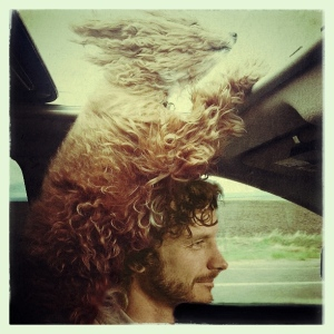 via Gotye.com, created by Wall-Nut @favfra